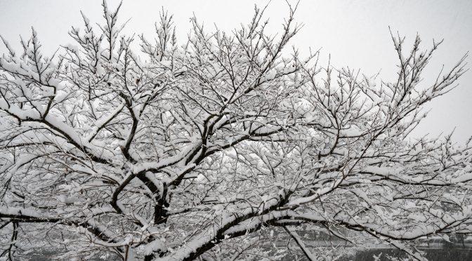 広島市内でも大雪(2017年01月15日)